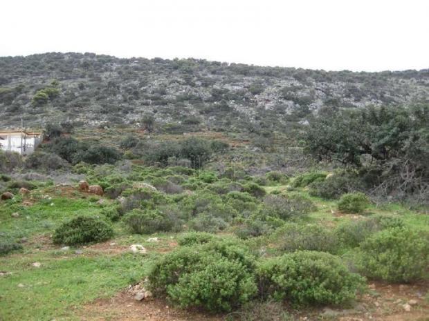 Οικόπεδο 6.900τ.μ. πρoς αγορά-Ηράκλειο κρήτης » Κέντρο