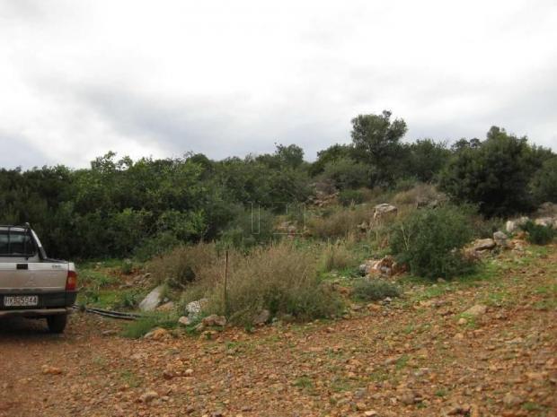 Αγροτεμάχια 4.200τ.μ. πρoς αγορά-Άγιος νικόλαος » Κέντρο