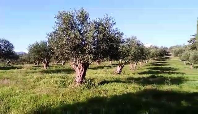 Αγροτεμάχια 8.000τ.μ. πρoς αγορά-Ζάλογγο » Καστροσυκιά