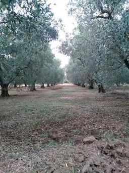 Αγροτεμάχια 1.438τ.μ. πρoς αγορά-Μουδανιά » Άγιος μάμας