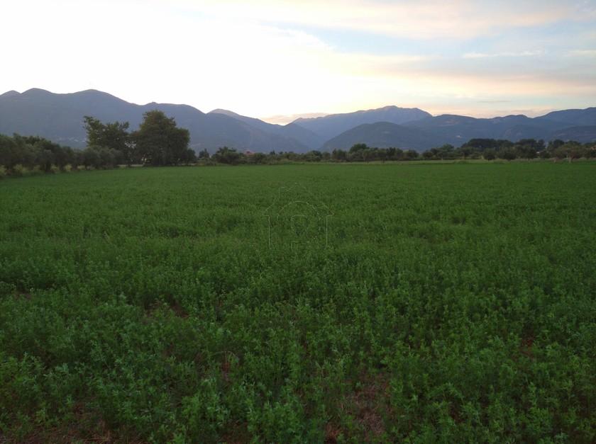 Αγροτεμάχια 4.000τ.μ. πρoς αγορά-Ευπάλιο » Μαλάματα