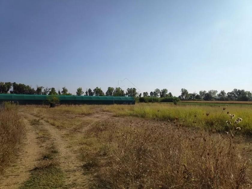 Αγροτεμάχια 10.500τ.μ. πρoς αγορά-Μητρόπολη » Φράγκο