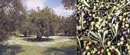 Αγροτεμάχια 7τ.μ. πρoς αγορά-Πέτα » Άγιος δημήτριος