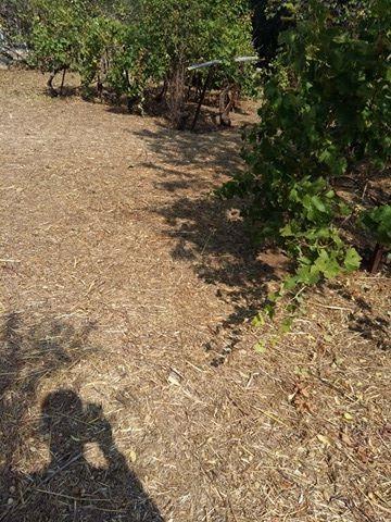 Αγροτεμάχια 460τ.μ. πρoς αγορά-Σχηματάρι » Πλάκα δήλεσι
