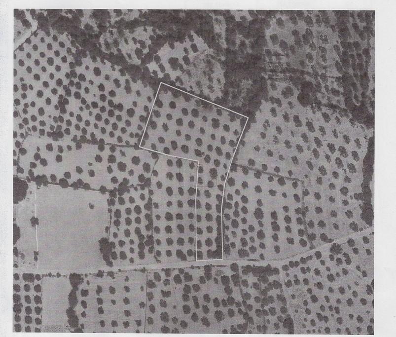 Αγροτεμάχια 7.944τ.μ. πρoς αγορά-Λέσβος - πολιχνίτος