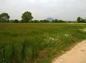 Αγροτεμάχια 6.600τ.μ. πρoς αγορά-Απολλώνια » Νικομηδινό