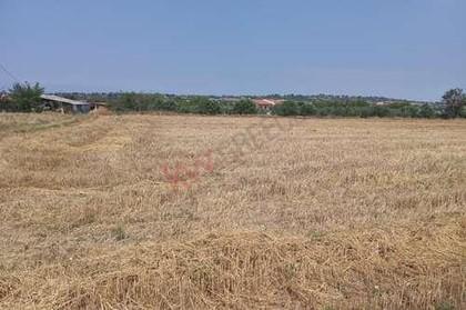 Αγροτεμάχια 6.000τ.μ. πρoς αγορά-Απολλώνια » Νικομηδινό