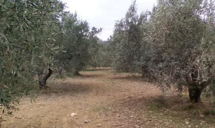 Αγροτεμάχια 3.000τ.μ. πρoς αγορά-Ναύπλιο