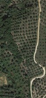 Αγροτεμάχια 12.000τ.μ. πρoς ενοικίαση-Κομπότι » Σελλάδες