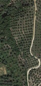 Αγροτεμάχια 12.000τ.μ. πρoς αγορά-Κομπότι » Σελλάδες
