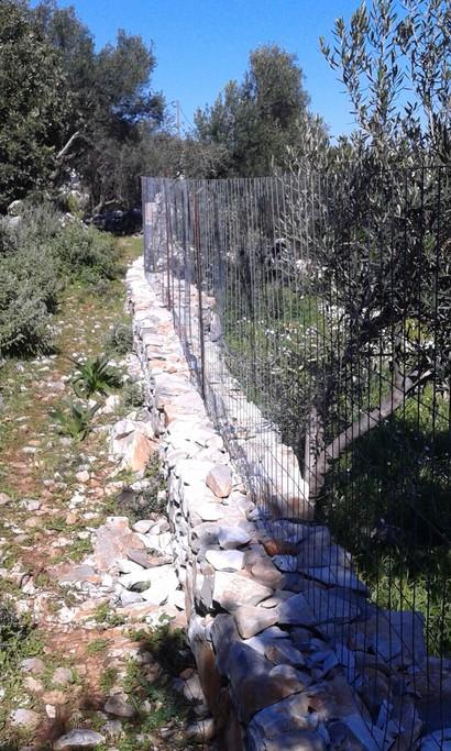 Αγροτεμάχια 1.000 τ.μ. πρoς ενοικίαση, Λακωνία, Ανατολική Μάνη-thumb-2