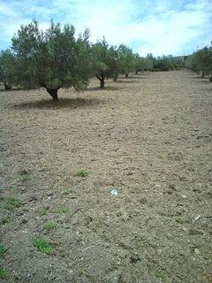 Αγροτεμάχια 6.000τ.μ. πρoς αγορά-Λιβαδειά » Περαχώρι
