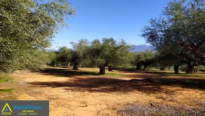 Αγροτεμάχια 4.700τ.μ. πρoς αγορά-Μεσσήνη » Καρτερόλι