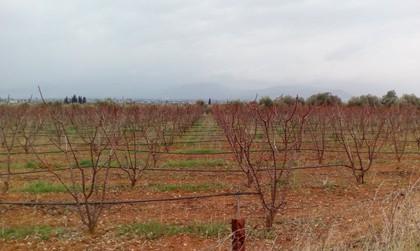 Αγροτεμάχια 18.000τ.μ. πρoς αγορά-Ναύπλιο