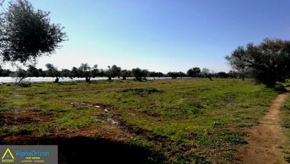 Οικόπεδο 4.670τ.μ. πρoς αγορά-Αμαλιάδα » Δουναίικα