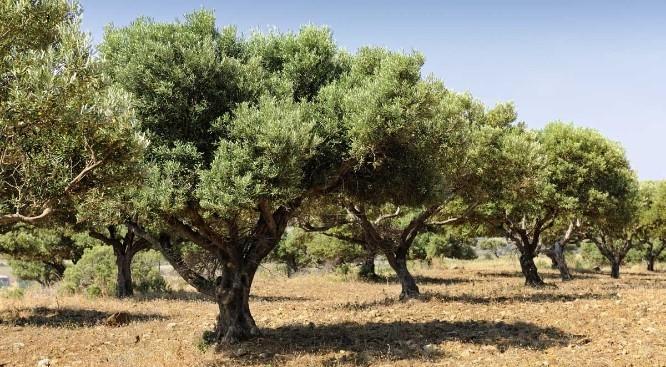 Αγροτεμάχια 5.000-10.000τ.μ. πρoς ζήτηση-Λαμία » Καλαμάκι