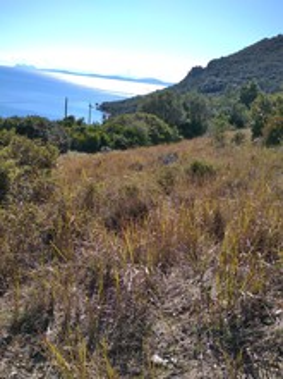 Αγροτεμάχια 6.000τ.μ. πρoς αγορά-Κεκροπία (παλαίρου) » Πογωνιά