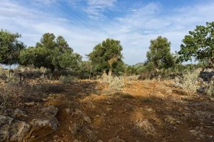 Αγροτεμάχια 4.135τ.μ. πρoς αγορά-Νικηφόρος φωκάς » Ατσιπόπουλο