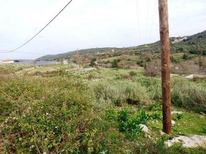 Οικόπεδο 3.000τ.μ. πρoς αγορά-Κρυονερίδα » Ασπροσυκιά
