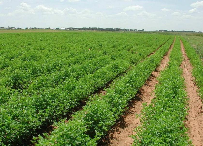 Αγροτεμάχια 7.000τ.μ. πρoς αγορά-Κάτω κλεινές » Νίκη