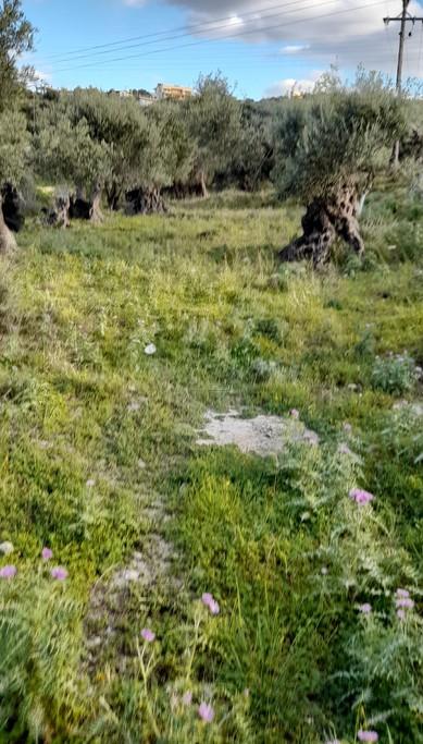 Αγροτεμάχια 2.313τ.μ. πρoς αγορά-Ρέθυμνο » Μαρουλάς