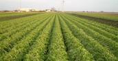 Αγροτεμάχια από 20.000 τ.μ. για ζήτηση