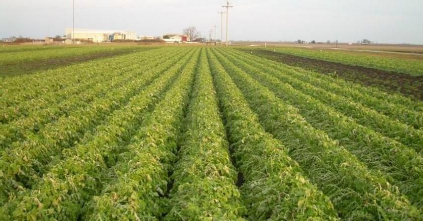 Αγροτεμάχια από 10τ.μ. πρoς ζήτηση-Φλώρινα » Κέντρο