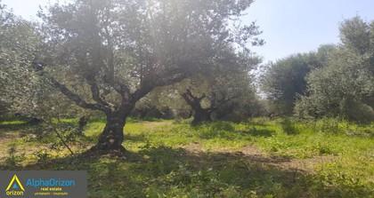 Αγροτεμάχια 9.000τ.μ. πρoς αγορά-Ιθώμης » Αριστοδήμειο