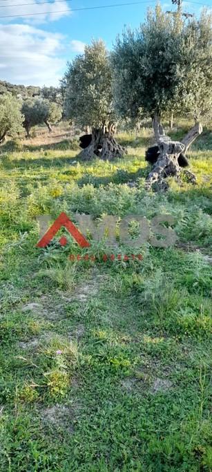 Αγροτεμάχια 2.313τ.μ. πρoς αγορά-Ρέθυμνο » Πλατανιάς